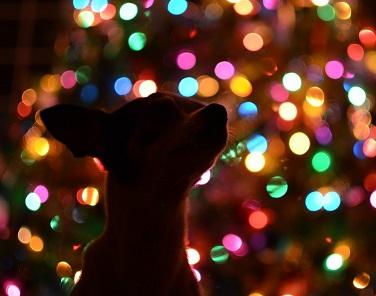 idee regalo cani natale 2016